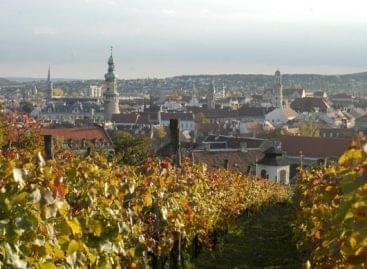 Elkezdődött a szüret a Soproni Borvidéken