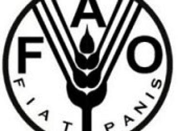 FAO: 30 tonna élelmiszer a nélkülözőknek az Élelmezési világnap adománykonvoj révén