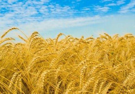 World food prices slide marginally in July