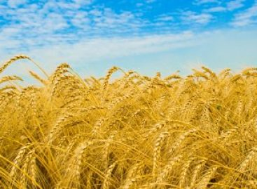 Mintegy 1250 milliárd forint jut agrár-vidékfejlesztésre