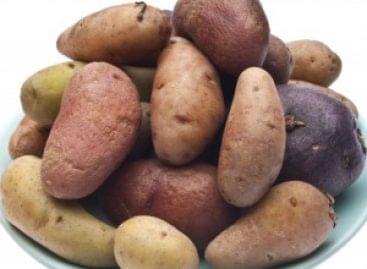 Új jelölések a burgonyákon