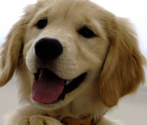 Hivatalosan is kutyabaráttá minősíthetőek a szállás- és vendéglátóhelyek