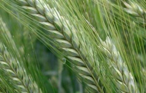 Módosult a növényvédelmi tevékenységről szóló rendelet