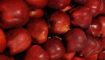 Gyenge lesz az idei termés, emelkedhet az alma ára