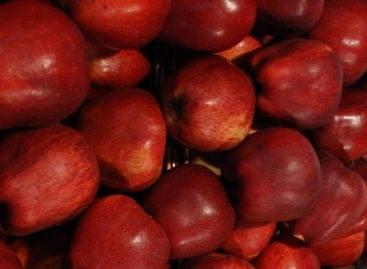 Gyenge almatermés várható az idén