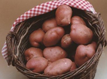 Októberben 5 százalék fölött nőttek a mezőgazdasági termelői árak