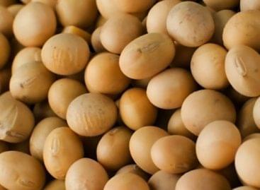 Újabb európai országok kötelezték el magukat a GMO-mentes szója termesztése mellett