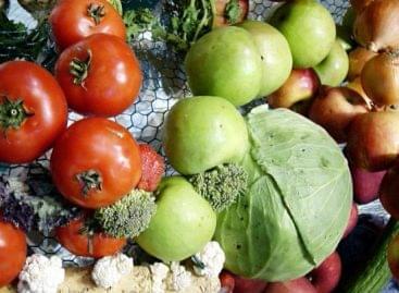 KSH: 4,8 százalékkal nőttek a mezőgazdasági termelői árak