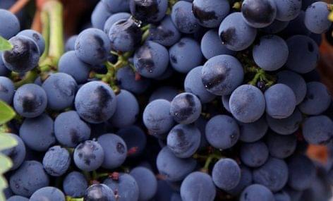 Kékfrankos Most! – Hatvan pincészet kékfrankosai a Sofitelben
