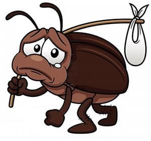 La cucaracha - A nap abszurdja