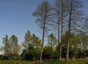 Milliárdokat fordított a kormány az erdészetek és a nemzeti parkok turisztikai fejlesztésére