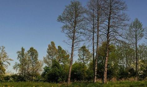 FM: az erdőgazdaságok több mint 16 milliárdot költöttek az erdei turizmus fejlesztésére