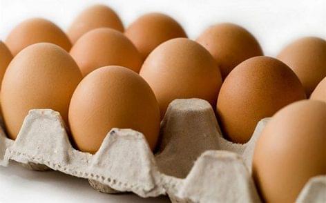 Tojásszövetség: nőtt a nagyüzemi tojástermelés az első fél évben