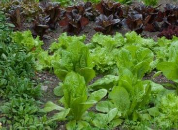 Értékteremtő tevékenységnek tekinti a kiskertek művelését az agrártárca