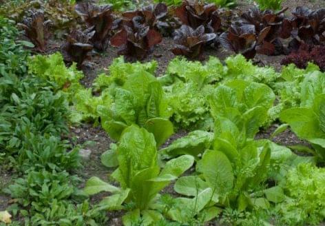 Decembertől szigorodnak a növényegészségügyi előírások