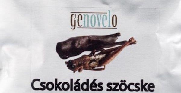 csokiszocske