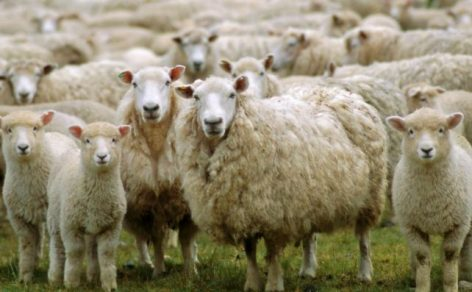Minister of State launches campaign to encourage sheep, goat and dairy products