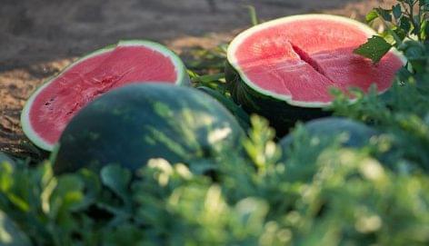 Minőségi dinnyét a magyar fogyasztónak: ebben segít a márkázás