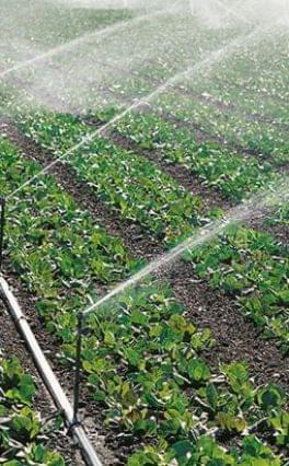 Csak annyi vizet szabad öntözésre használni, amennyit a természet vissza tud pótolni