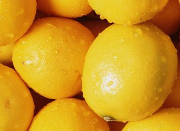 A legtöbb vizsgált citromnál nem talált problémát a Nébih