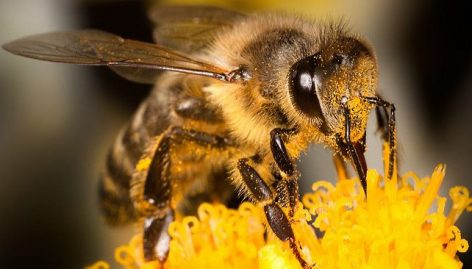 In order to comply with plant protection regulations, Nébih is committed to protecting bees