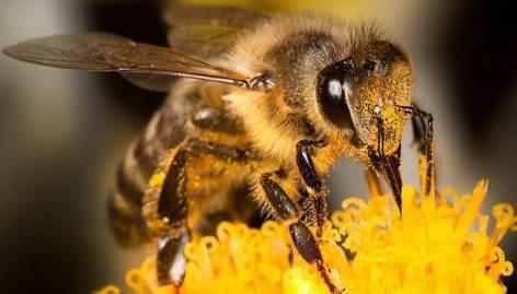 Declining bee populations threaten food supply
