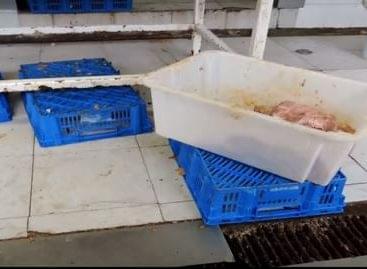 Húsnagykereskedés, Pest Megye, 2015 – A nap videója