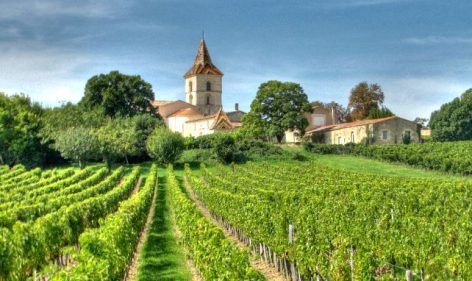 Vihar és fagy tépázza a francia szőlőtermelést