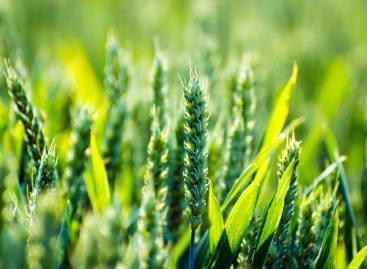A Nestlé 2050-re éri el karbonsemlegességet