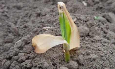 Agrárkamara: április 15-ig jelenthetik be a gazdák a fagykárt