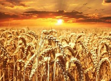 (HU) Készülnek a 2023 utáni Közös Agrárpolitikára vonatkozó hazai tervek