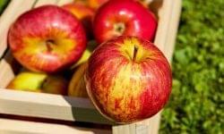 Őshonos gyümölcsfákat ültetnek Rákóczifalván