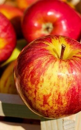 FruitVeb: a várható almatermés egyharmada lesz étkezési minőségű