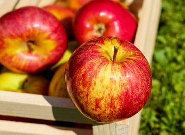 Útjára indult az almakampány