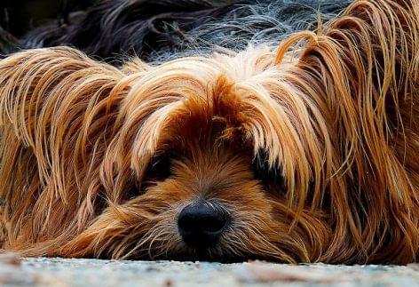 Egy hét fizetett szabadságot ad új kutyát nevelő alkalmazottainak a skóciai sörfőzde