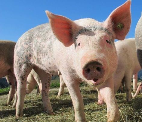 Az áfacsökkentések hatására nőtt a sertéshúsfogyasztás
