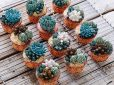 A kaktusz virága – A nap képe