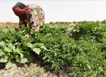 FAO: 21 nagyvállalat csatlakozott az Élelmezési világnap adománykonvojhoz