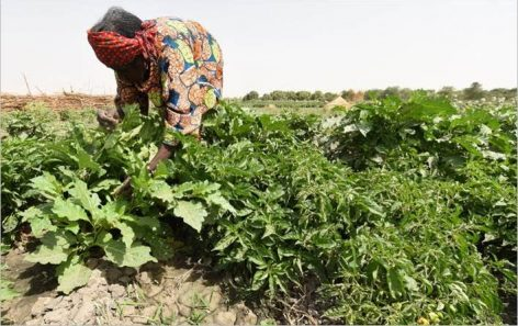 A fenntartható termelés képes enyhíteni a klímaváltozás következményeit és a kényszerű elvándorlást