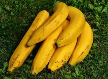 25 pennys, kicsit barna banánokat árul az M&S