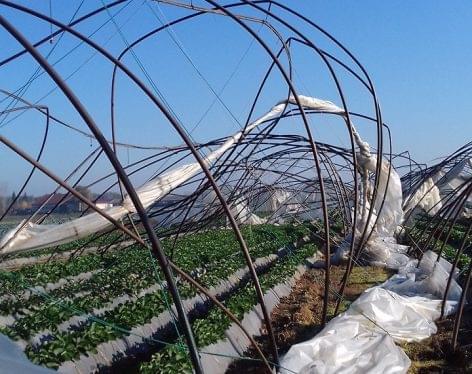 Magyar szabadalom a mezőgazdasági műanyaghulladék feldolgozására