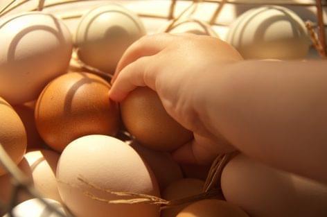 Biztonságot adhat a védjegyes tojás