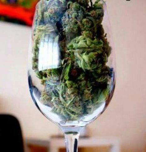 A marihuána hatása az alkoholforgalomra