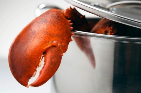 When the lobster screams