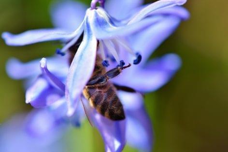 Együttműködik az agrártárca a méhészekkel