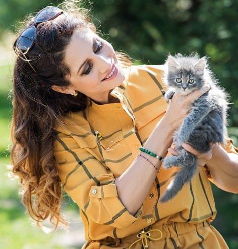 A macskák boldogságáért fogtak össze a sztárok