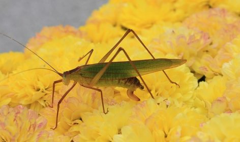 Insects can be the new protein source
