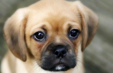 Szalmonellás kutyaeledelt hívott vissza a hatóság