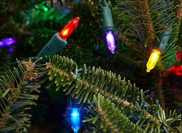 The Ministry of Agriculture will pay 73,000 HUF per hectare for the Christmas tree areas