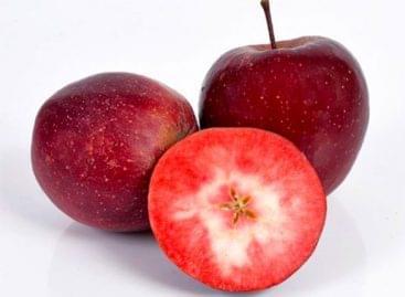 Népszerű a Kissabel alma